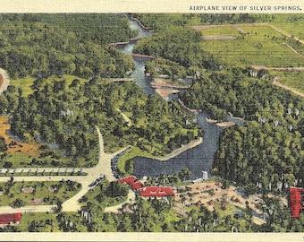Silver Springs, Florida - Vintage Postcard - Postcard - Unused (ZZ)