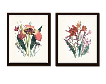 Botanical Print Set No. 5, Lily, Lilies, Giclee Art Print, Botanical Print, Wall Art, Cottage Decor, Large Botanical Prints, Flower Prints