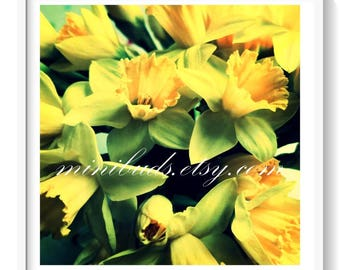 Daffodil 'My Corona' with white border digital download. Narcissus photo. Nature photography, botanical wall art. NOT A PHYSICAL ITEM.