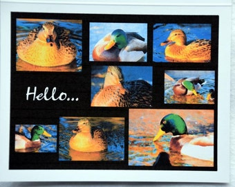 Collage of Painted Mallards Saying Hello - Notecards