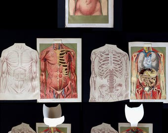 Antique 1912 Medical Anatomy Diagram Fold Out Chromolithograph Bookplate Muscles Svankmajer Collage Material
