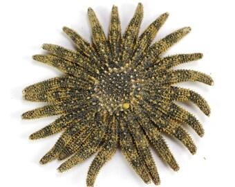 """2-4"""" Multileg Starfish seastar sea life ocean beach nautical Hawaii seashell decor wedding gift"""