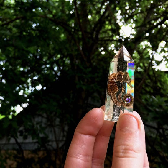 Genuine (naturally passed) Seahorse Preserved in Clear Casted Resin 6 Prism Point Crystal Structure, Decor
