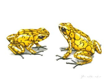 Signed Print - Two yellow Diablito poison dart frogs