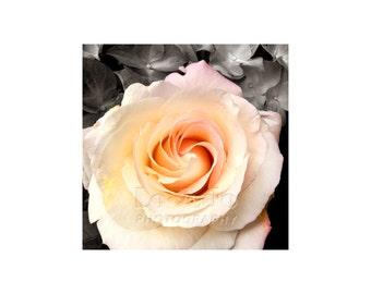 Rose Photograph, Paris Photography, Garden Art, Paris Flower Market