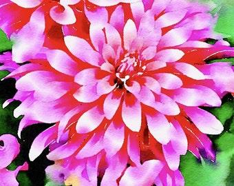 Watercolor Print - Floral - Dahlias