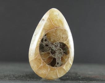 Tear drop Ammonite fossil cabochon B6756
