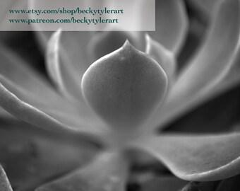 Echeveria Macro Photography Fine Art Photo Print