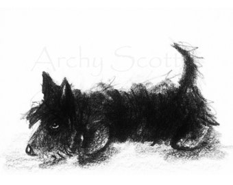 Scottie  Dog  Art Print