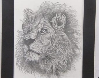 LION PENCIL DRAWING/Original Drawing/Second In Series Of Lion Drawings