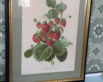 Large Vintage Antique Framed Strawberry Print - Strawberry plant Botanical Print Framed