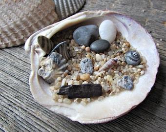 Mini Zen Garden Kit in a Sea Shell  - Sand - Rocks Stones- Desktop Zen Garden - Beach Office Decor - Fairy Garden - Co Worker Hostess Gift