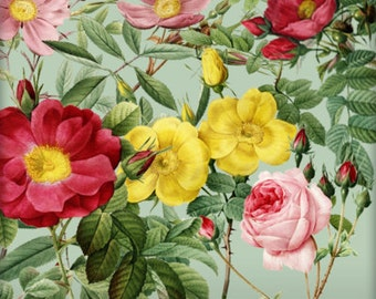 Vintage Roses Digital Clipart Set #1 - 5 PNGS Rose Clip Art - Altered Art, Digital Scrapbooking - Printable Roses Images - Rose Elements