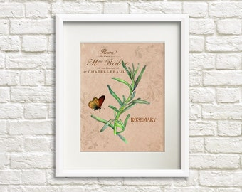 Herb Garden V Rosemary - Herb Artwork - Floral Art Print - 8x10 Print - French Country Style - Cottage Chic Style Decor