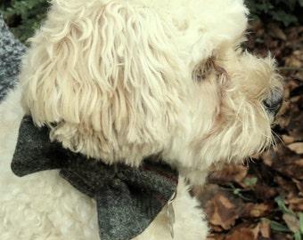 A dog bow tie, made from tartan wool.  Dog neckwear.
