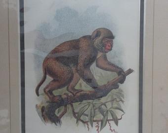 A st john's macaque monkey print