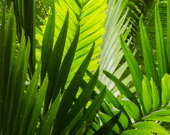 """Tropical Palms: nature photography greeting card - 5x7"""" frameable"""