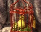 Taxidermy Duckling