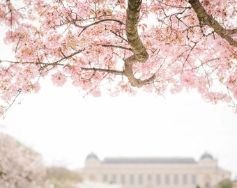Paris in Spring Photography, Paris Blooms, Pink Spring Flowers, Paris Flowers, Travel Fine Art Photograph, Large Wall Art, Gallery Wall
