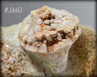 Fossil Crinoid (Eutrochocrinus Christyi) Calyx in Fossiliferous Dolomite, from Pike County, Missouri, USA