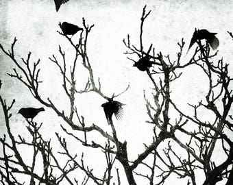Into the Light, Fine art photography, Black and white photography of birds flying up from a tree