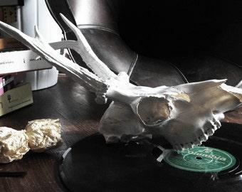 Real decorate Skull! Alternative home decor