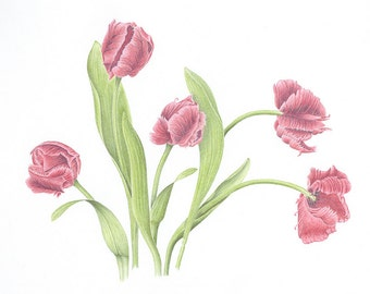 Tulip Waltz