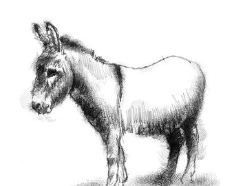 Young donkey | Limited edition fine art print from original drawing. Free shipping.