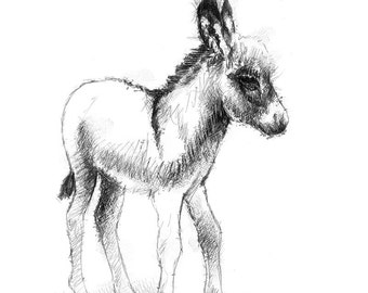 Baby donkey   Limited edition fine art print from original drawing. Free shipping.