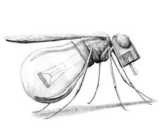 postcard Mosquito