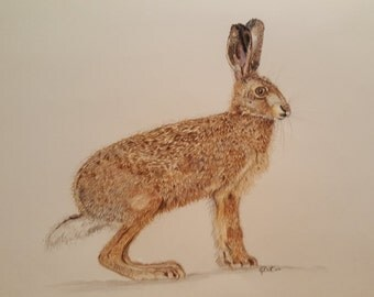 Hare! - Irish Wildlife Collection, Giclee Print