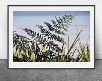 Fern, Digital Download, Photography, Nature, Botanical, 8x12 inch File, Summer, Nautical, Leaf