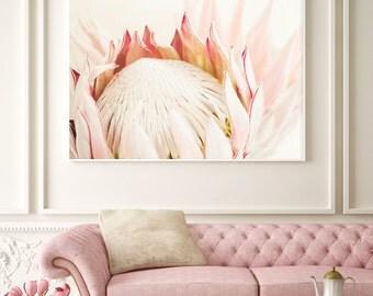 King Protea flower Photography No.119, Fine art photograph, Romantic photography, Soft petals, Blush pink tones