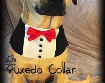 Wedding Dog collar,Wedding Collar, Pet wedding, pet collar,wedding accessories,tuxedo, wedding tux, tuxedo, collar