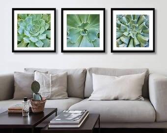Cactus Print Set, Succulent Cactus Prints Set, Cacti Print, Succulent Print, Botanical Art, Cactus Print, Cactus Photo, Succulent Print