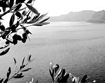 Santorini Print, Greece Photography, Black and White Fine Art Photography, Oia View, Olive Tree, Islands, Travel Photography - Thirassia