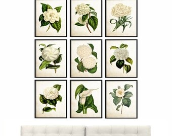 Botanical Print Set of 9, Botanical Prints set Giclee Canvas Art Prints, Antique Botanical Prints ,Posters, White Floral Wall Art