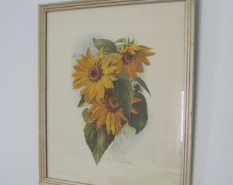 "Sunflower Print, Smeele, Framed behind Glass, 12.75"" x 10.75"", Vintage"
