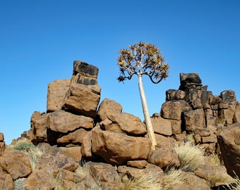 dolerite rock formations, landscape photography, quiver tree, nature photography, Namibia, Africa, large wall art, fine art photography