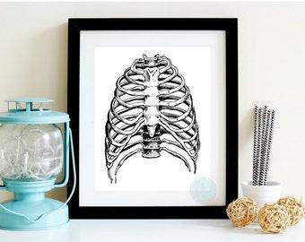 PRINTABLE ART Rib Cage Print Medical Printable  Human Anatomy Medical Illustration Skeleton Illustration Anatomy Rib Cage Human Anatomy Art
