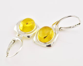 BALTIC AMBER Sterling Silver Earrings with Fossil Insects