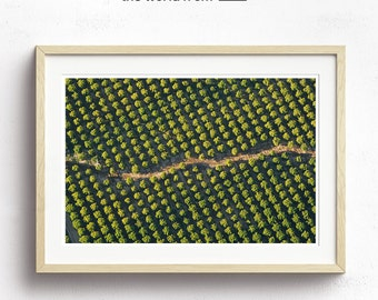 Framed Californian Vineyards Aerial Photography, Abstract Large Wall Art Decor, Colour Fine Art Photography, Art Prints, Green Landscape