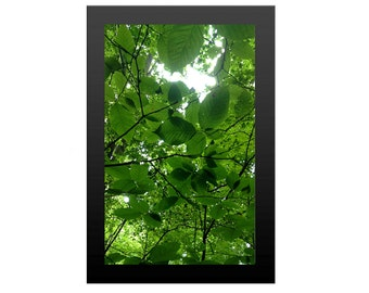 Tree Art Print, Green Canopy Forest II, Tropical Wall Decor, Nature Lover Print, Outdoor Instant Download