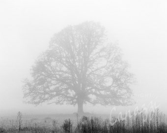 Morning Fog / landscape black and white photograph, fine art, wall art print, landscape photo, b&w photography, nature wall decor