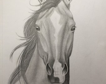 Arabian Horse with Blaze Portrait