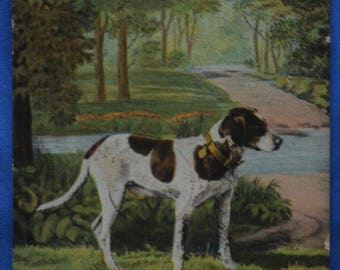 Postcard Brown and White Spaniel Dog 1905 Canada Antique Undivided Back UDB