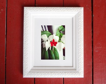 Photograph: Bleeding Heart Flower Nature Photography 5x7 Red and Green