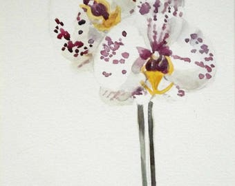 phalaenopsis watercolor flower painting set of two
