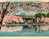 Washington DC Vintage Postcard - The Lincoln Memorial through the Cherry Blossoms (Unused)