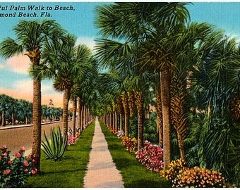 Vintage Florida Postcard - The Palm Walk to Ormond Beach (Unused)